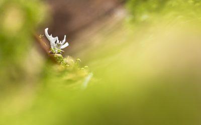 im Herbstwald – Herbstfarben und Pilze