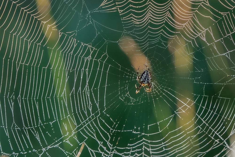 Die Spinnennetze